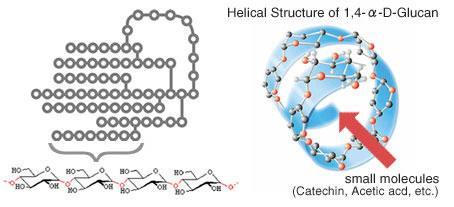 Model-helikalnej-struktury-łańcuchów-glukozylowych