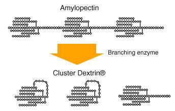 Schematyczne przedstawienie działania enzymu rozgałęziającego na amylopektynę