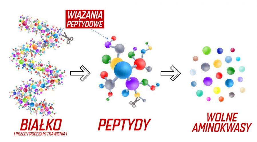 hydroliza-proces