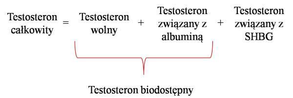 testosteron biodostępny