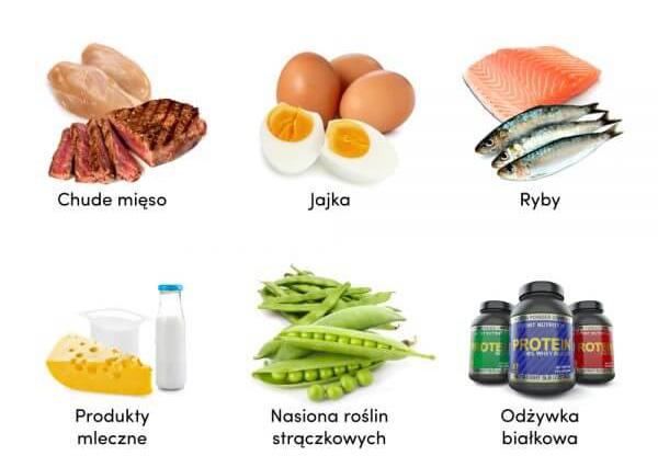 źródło białka w diecie